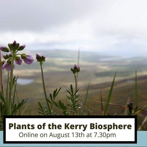 """gegutės gėlių atvaizdas su tekstu, tekstas """"Kero biosferos rezervato augalai"""""""