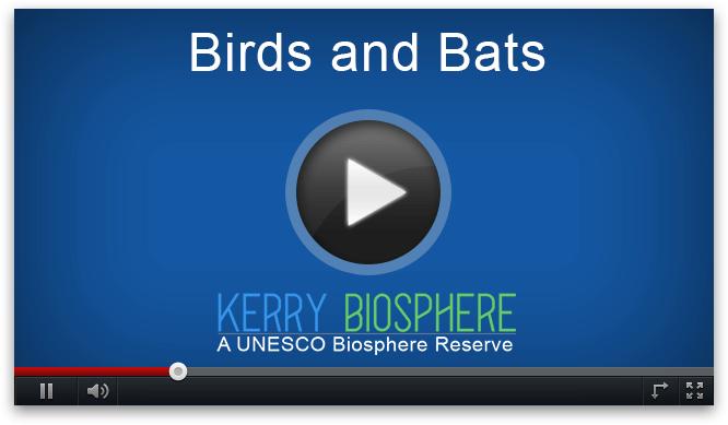 Video paukščiai ir šikšnosparniai