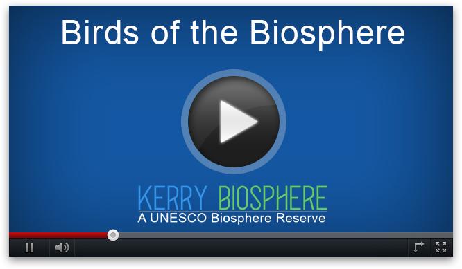 vaizdo paukščių biosfera