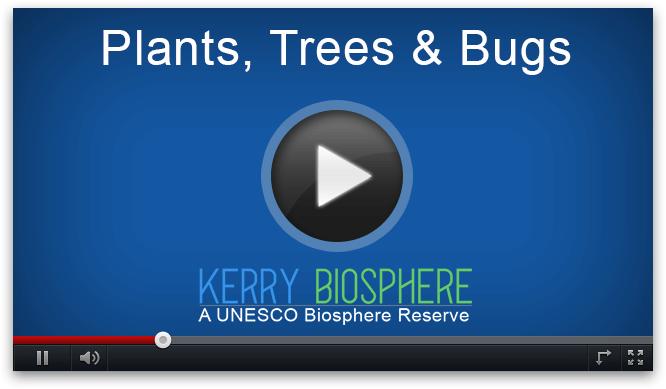 Vaizdo augalai Medžiai ir klaidos